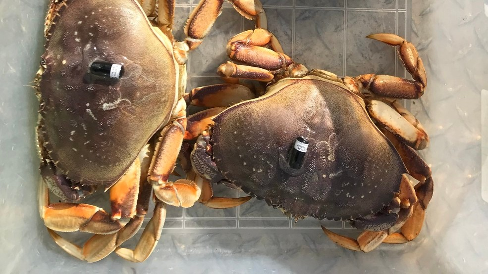 photo of two crabs