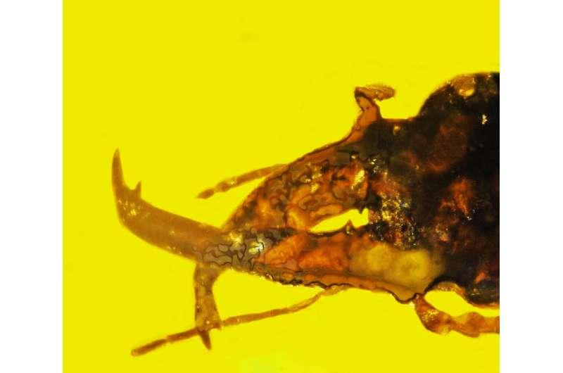 magnified image of weevil in amber