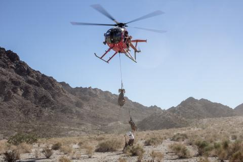 helicopter lifting a Bighorn