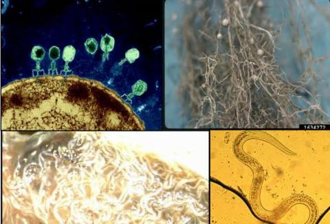 images through microscope