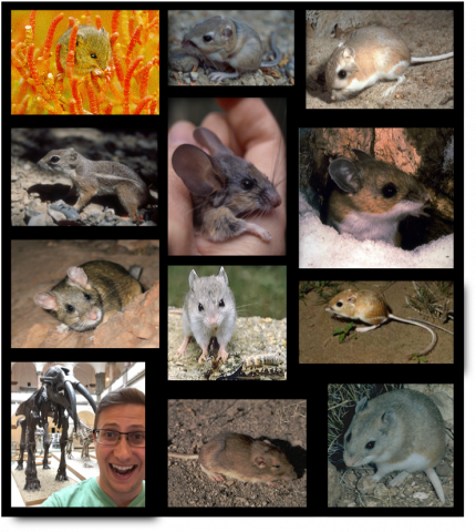 collage of small photos of small rodents